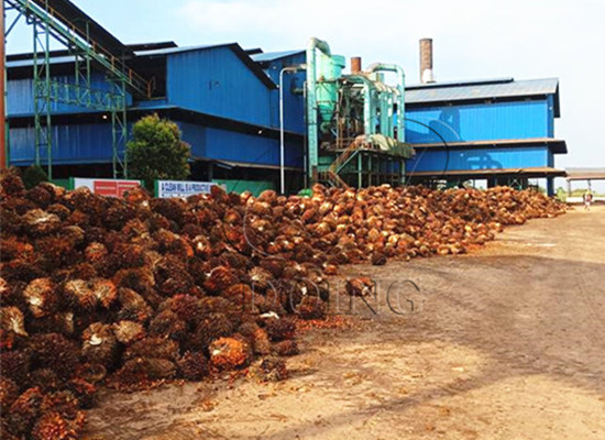 Why so many investers want to start a palm oil processing business in Nigeria?