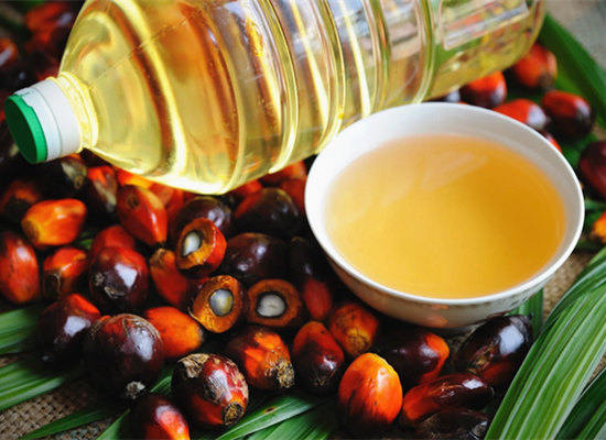 Where is the oil palm plantations in The Nigerian States?