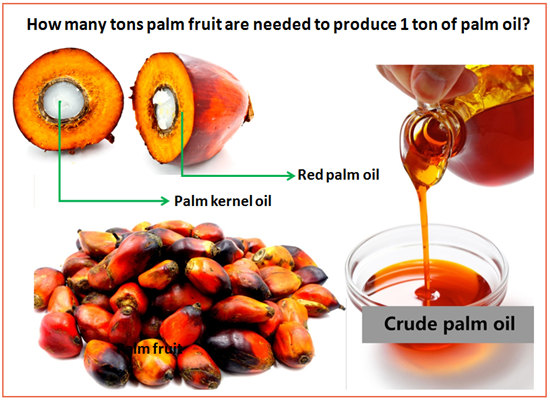 Why you should invest in palm oil processing and production business in Nigeria?