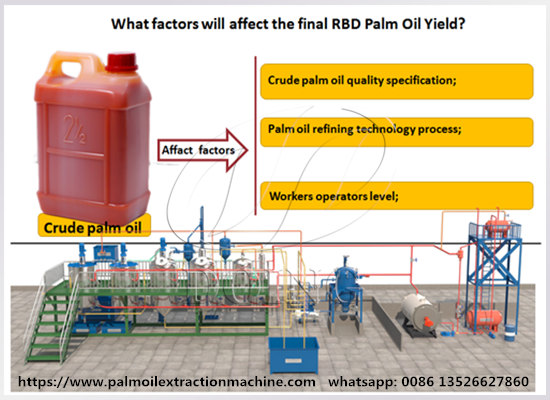 What factors affect the final RBD palm oil yield?