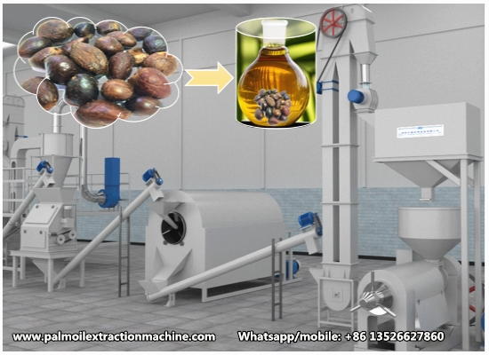 New design small scale palm kernel oil processing machine working video